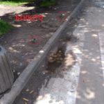 Люди, які переходять цю дорогу у Тернополі, потрапляють у смітник (фото)