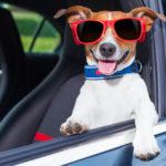 Тернополянка розповіла про життя собак, яким можуть позаздрити люди