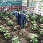Житель Тернопільщини через роботу на городі потрапив до суду