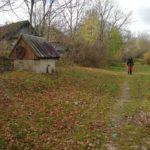 На Тернопільщині люди збирають опеньки просто на покинутих подвір'ях села