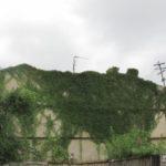 Житловий будинок на Тернопільщині – як з казки