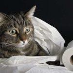 Повернувшись із церкви, пенсіонерка з Тернопільщини зарубала кота