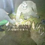 Біля Чорткова ловлять рибу забороненим знаряддям