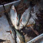 На Тернопільщині ловлять рибу забороненими знаряддями