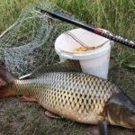 Найкращу рибу у тернополіських ставках виловлюють підпільні рибалки