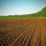 На Тернопільщині задля сільського господарства захопили 30 гектарів землі