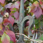 Як туман і дикий виноград змінює  Тернопіль восени