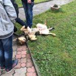 У тернопільській церкві священик на очах у дітей бив ногами собаку