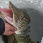 Тернопільський рибоохоронний патруль розробив інтерактивну карту зимувальних ям