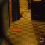 Хто ховається у під'їздах тернопільських будинків – таємниці буденності
