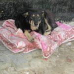У Тернополі бездомний собака має кращі умови для життя, ніж деякі люди (фото)