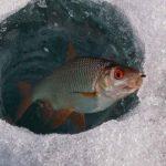 На тернопільських водоймах задихається риба
