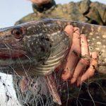 На Тернопільщині впіймали браконьєрів
