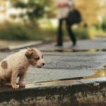 Житель Тернопільщини вважає, що безпритульних собак потрібно вбивати