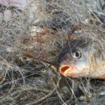 Минулого року на Тернопільщині браконьєри наловили більше тонни риби