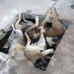 У селі на Тернопільщині люди довели, що можуть бути жорстокішими від тварин