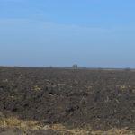 Відомий фермер з Тернопільщини повинен повернути державі земельну ділянку вартістю 15 мільйонів гривень