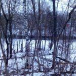 Хтось вирішив, що у тернопільських парках майже усі дерева хворі