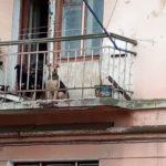 Тернополяни тримають у квартирах багато собак (фото)
