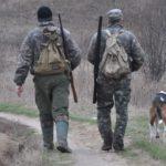 В одному з районів Тернопільщини хочуть відстрілювати лисиць