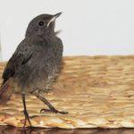 Тернополянка кілька років сподівається знову зустріти врятованого птаха