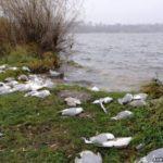 Чим отруїлися перелітні птахи у Тернополі, поки що не знають навіть спеціалісти