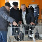 У райцентрі на Тернопільщині гусака хотіли продати за 1,5 тисяч гривень