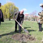 Варвари, які позрізали старі тополі по вул. Білецькій в межах парку Шевченка будуть покарані