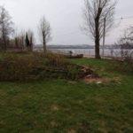 За фактом зрізання дерев у парку ім. Т. Шевченка подано заяву у правоохоронні органи