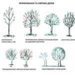 Дерева не нищать, а рятують: У державній еко-інспекції пояснили необхідність санітарної обрізки