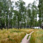 Тернополянин пропонує зберегти ще одну зелену зону нашого міста