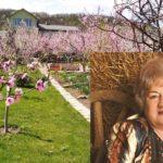 У райцентрі на Тернопільщині є садиба, у якій квітне легендарна квітка (фото)