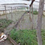 На Тернопільщині від стихії постраждало ще одне село (фото)