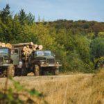 На Тернопільщині у лісі знайшли злодіїв