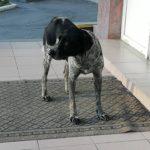 У Тернополі собака із сумними очима виглядає господаря біля офісів