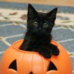 Тернопільські зоозахисники попереджують, що напередодні Хеловіна чорним котам загрожує небезпека