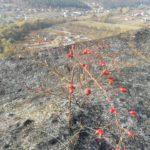 На Тернопільщині хтось підпалив природний заказник
