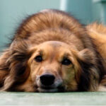 У містечку на Тернопільщині масово вмирають собаки